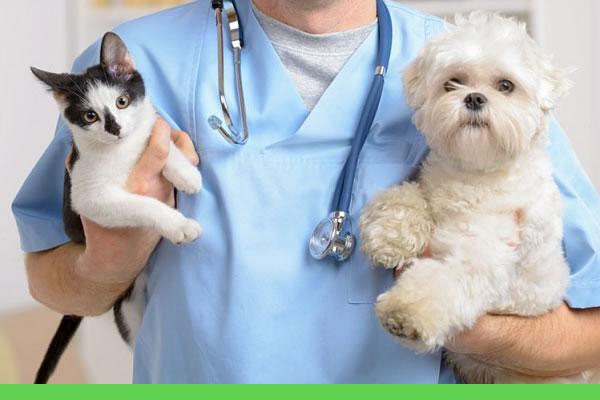 Clínica veterinária para gatos e cachorros