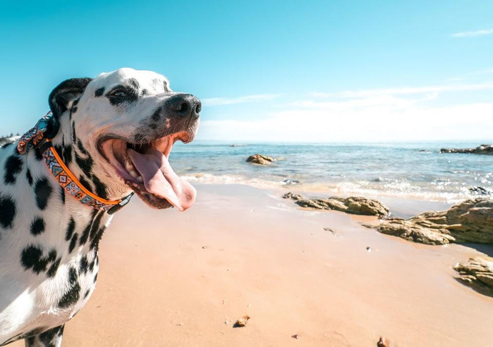 Normas básicas para levar o cão à praia