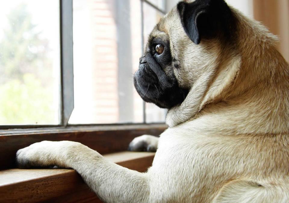 Pode deixar o cachorro ficar sozinho o dia todo?