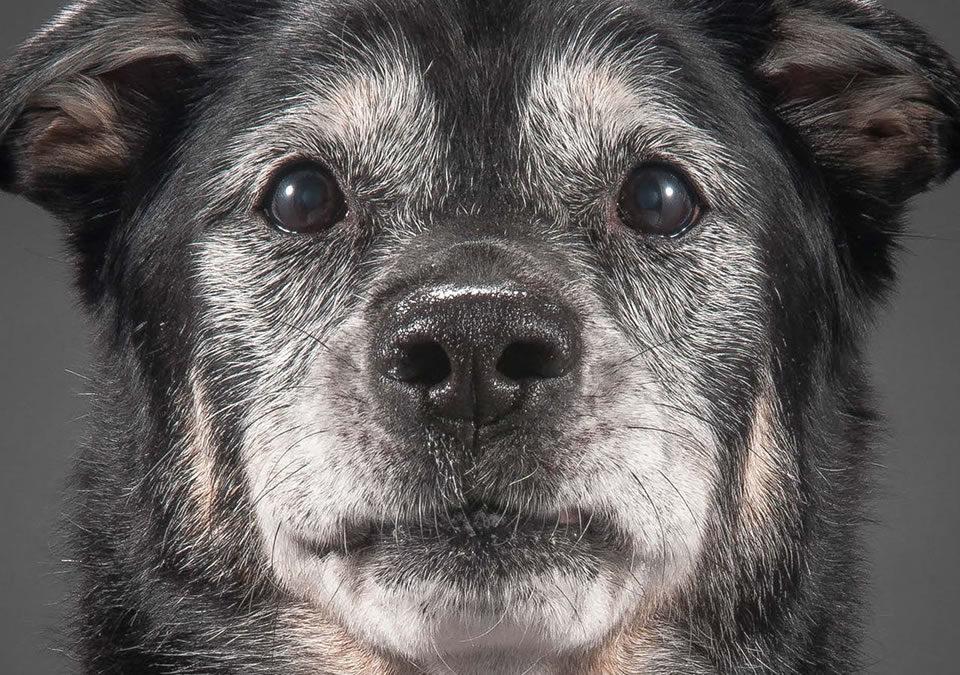 Cão idoso: saiba quais são os cuidados necessários